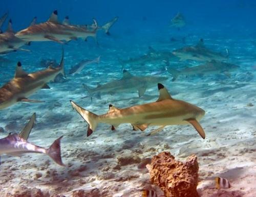 du lich maldives tour24h 8  Khám phá thiên đường biển đảo Maldives du lich maldives tour24h 8