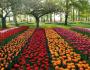 Kinh nghiệm du lịch Hà Lan từ A...đến...Z